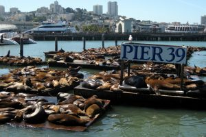 Seal Lions Fishermans Wharf