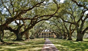Oak-Alley Plantation